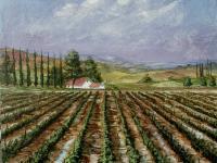 Vineyard Series #5